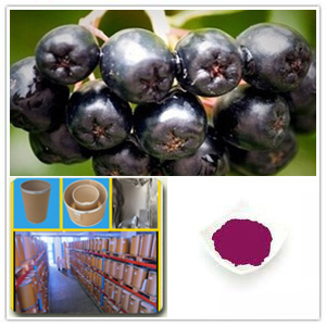 Aronia chokeberry Extract