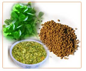 Fenugreek Leaves Extract