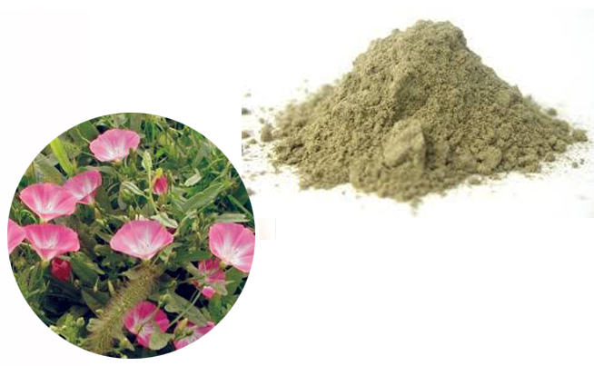 Field Bindweed Extract(Convolvulus Extract)
