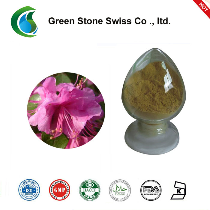 Rhododendron Dauricum Extract(Daurian Rhododendron Extract)