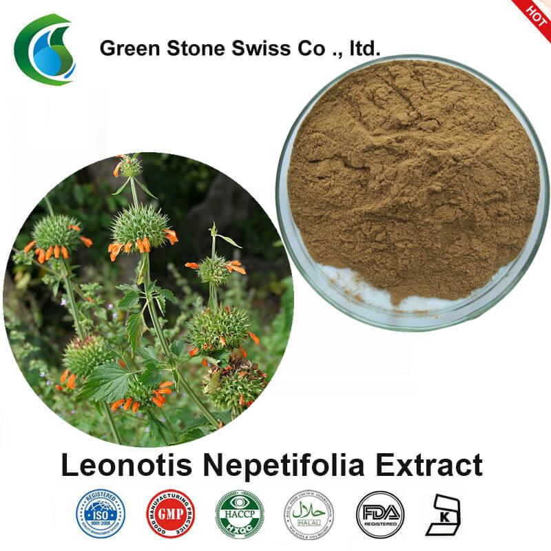 Extrakt z Leonotis Nepetifolia