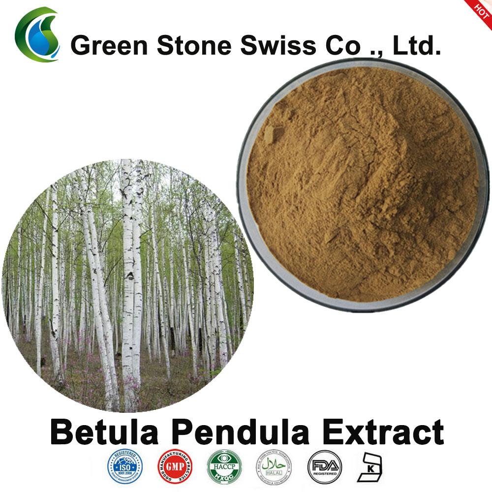 Chiết xuất Betula Pendula