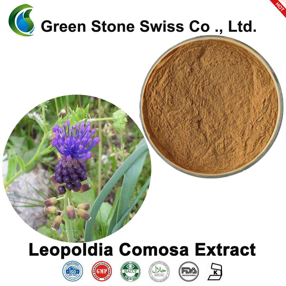 Chiết xuất Leopoldia Comosa