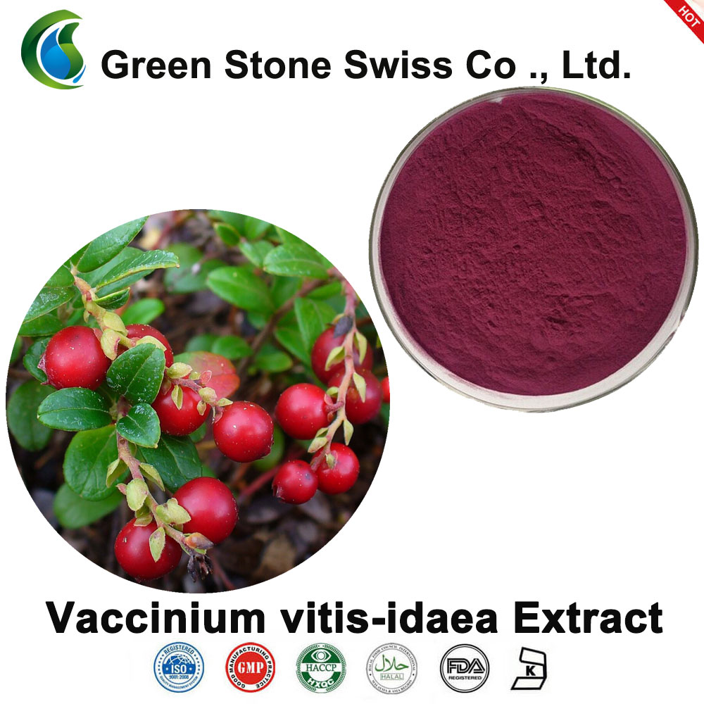 Chiết xuất Lingonberry (Chiết xuất Vaccinium vitis-idaea)