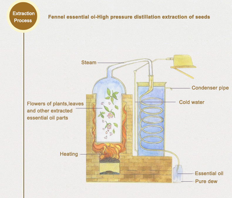 Fennel Essential Oil Extraction Process